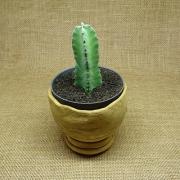 Euphorbia resinífera