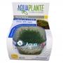 PLANTA NATURAL RICCIA FLUITANS - AQUAPLANTE