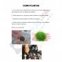 PLANTA NATURAL TAXIPHYLLUM SP. FLAME - AQUAPLANTE