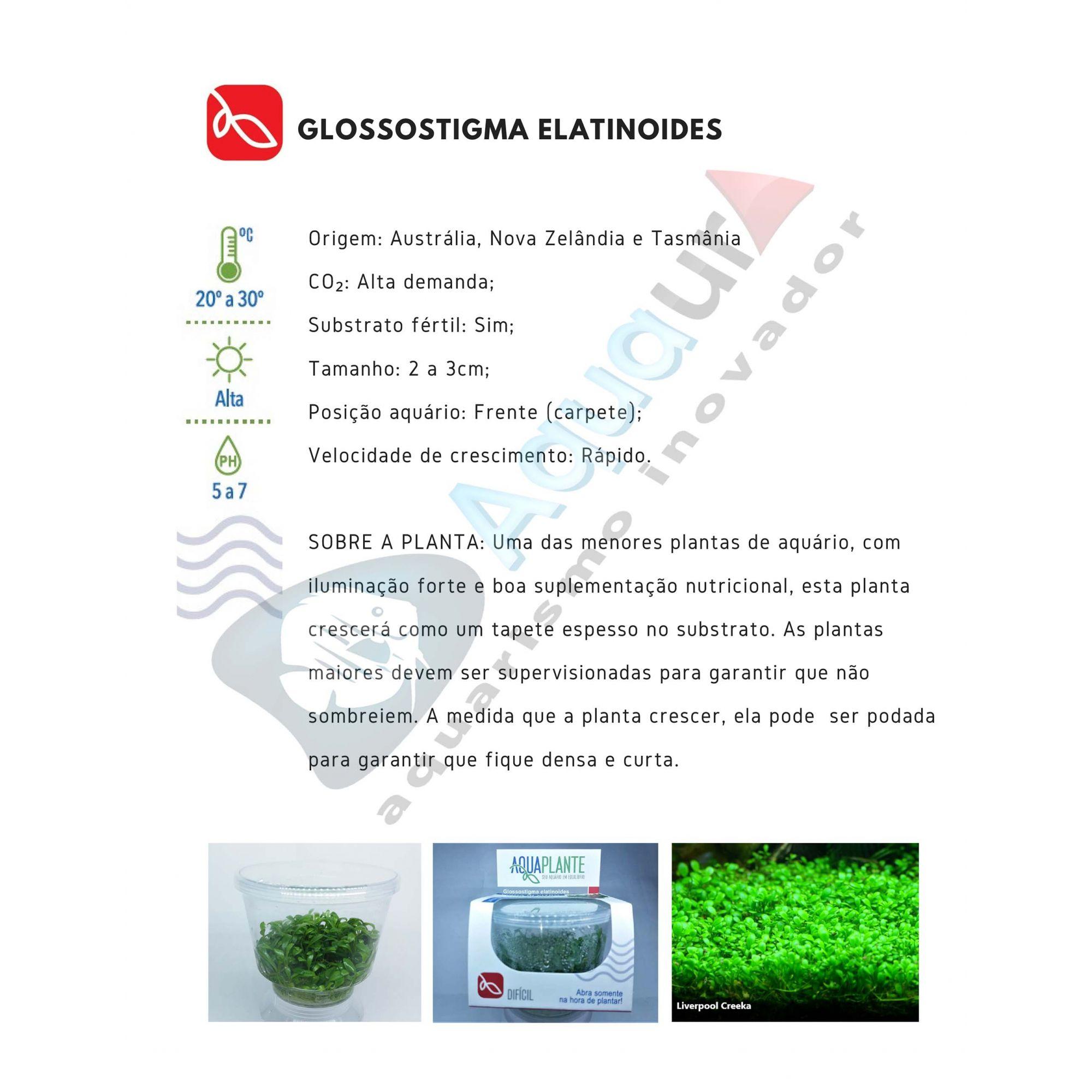 PLANTA NATURAL GLOSSOSTIGMA ELATINOIDES - AQUAPLANTE