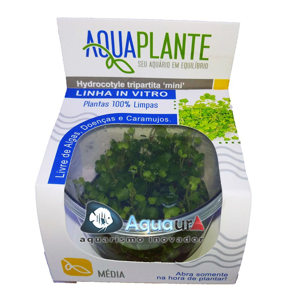 PLANTA NATURAL HYDROCOTYLE TRIPARTITA ?MINI? - AQUAPLANTE