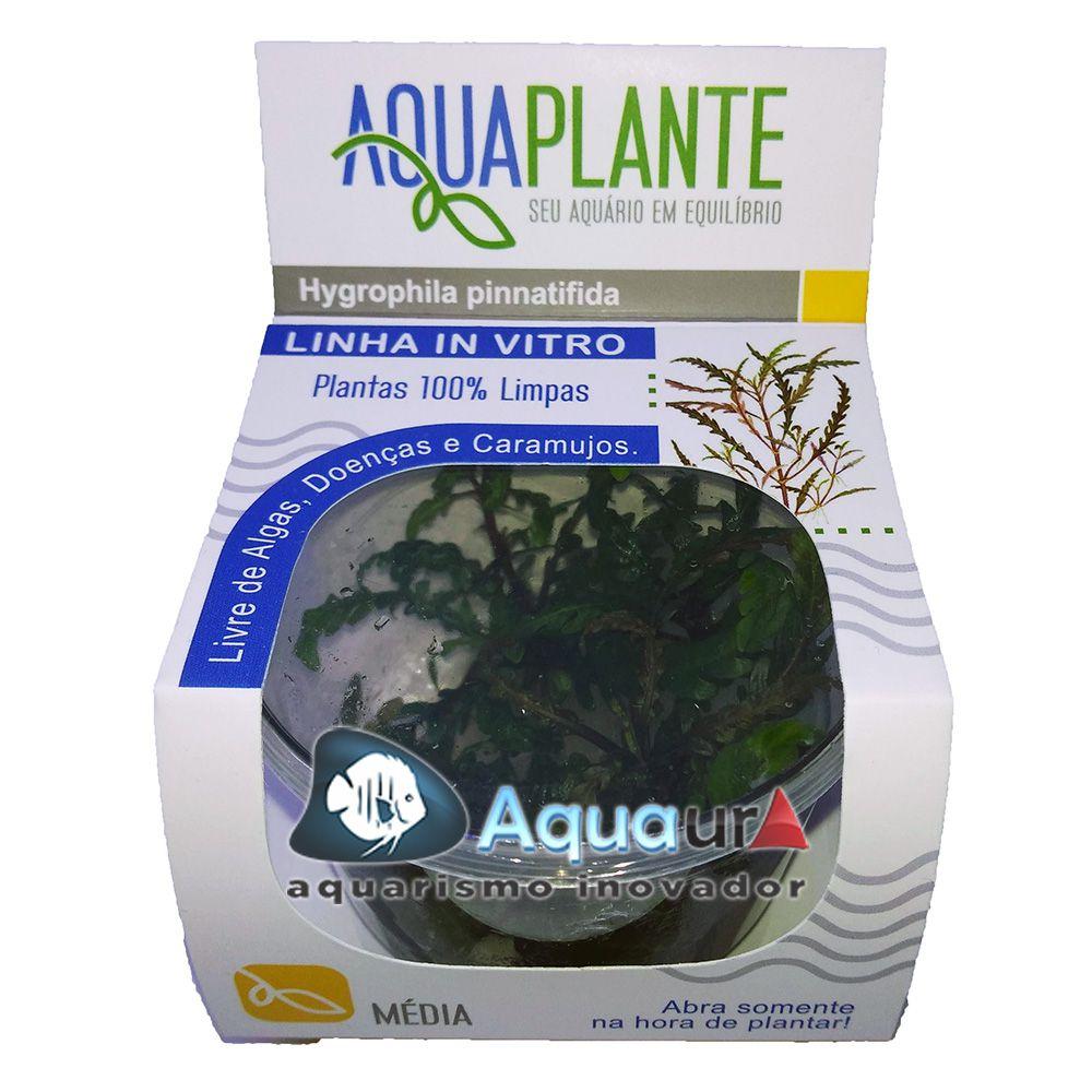 PLANTA NATURAL HYGROPHILA PINNATIFIDA - AQUAPLANTE