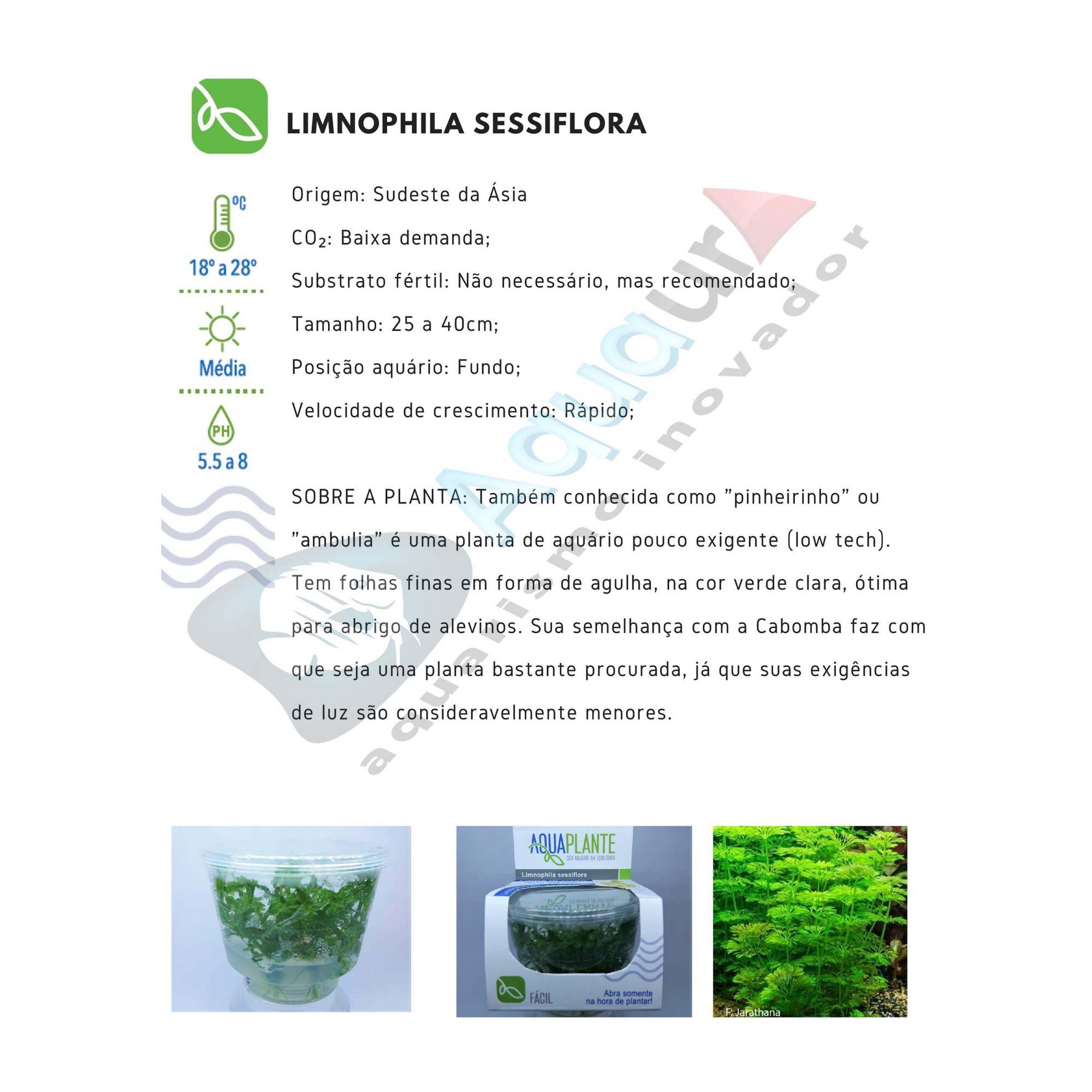 PLANTA NATURAL LIMNOPHILA SESSILIFLORA - AQUAPLANTE