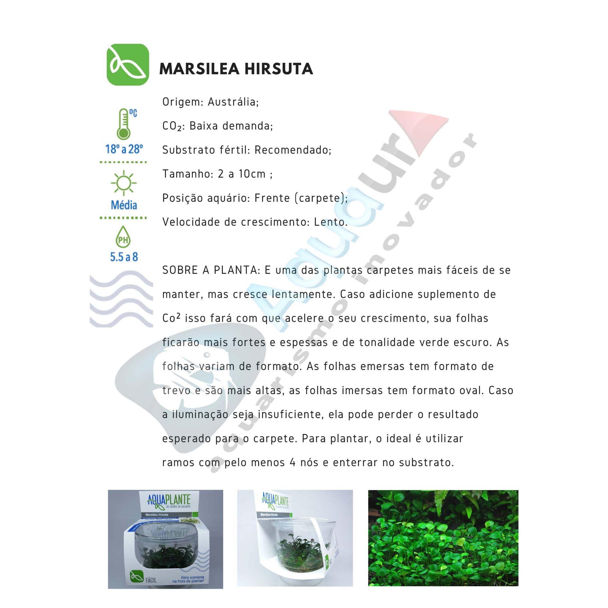PLANTA NATURAL MARSILEA HIRSUTA - AQUAPLANTE