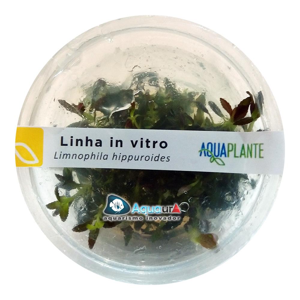 PLANTA NATURAL LIMNOPHILA HIPPUROIDES - AQUAPLANTE