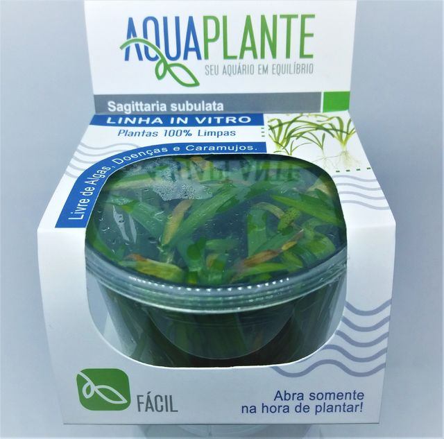 PLANTA NATURAL SAGITTARIA SUBULATA - AQUAPLANTE