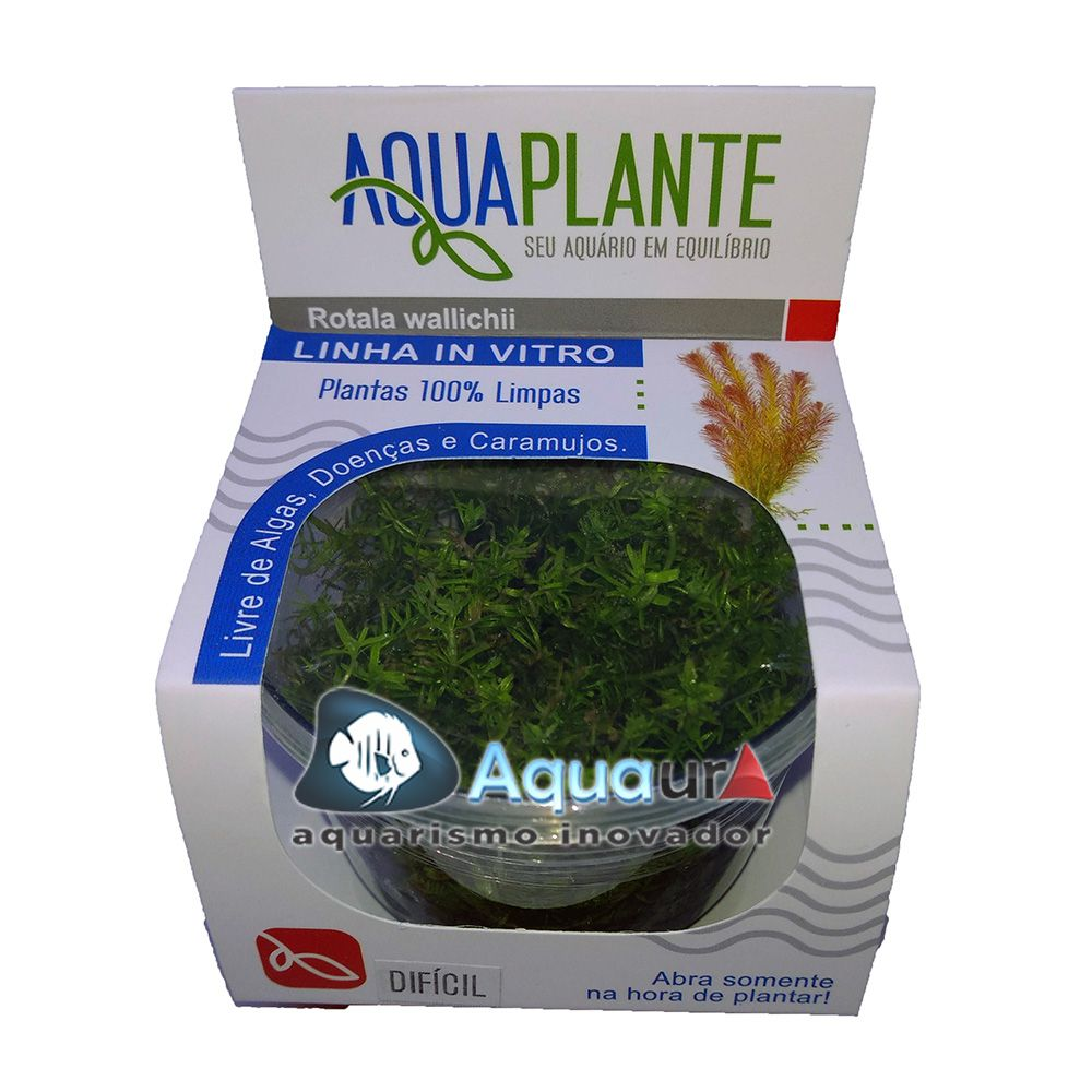 PLANTA NATURAL ROTALA WALLICHII - AQUAPLANTE
