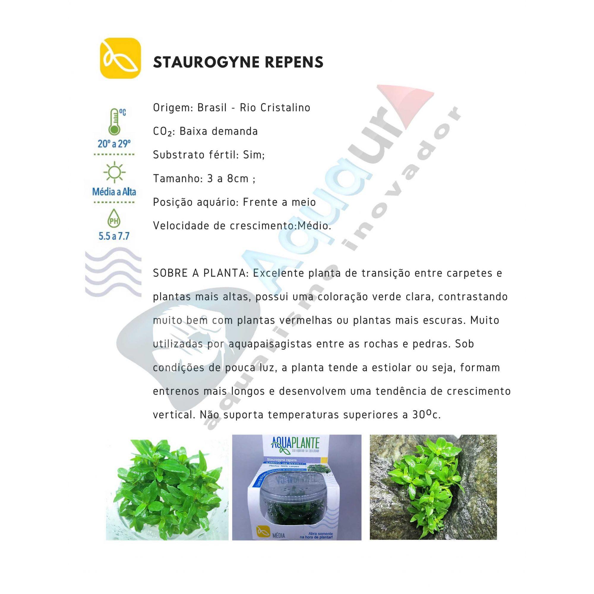 PLANTA NATURAL STAUROGYNE REPENS - AQUAPLANTE