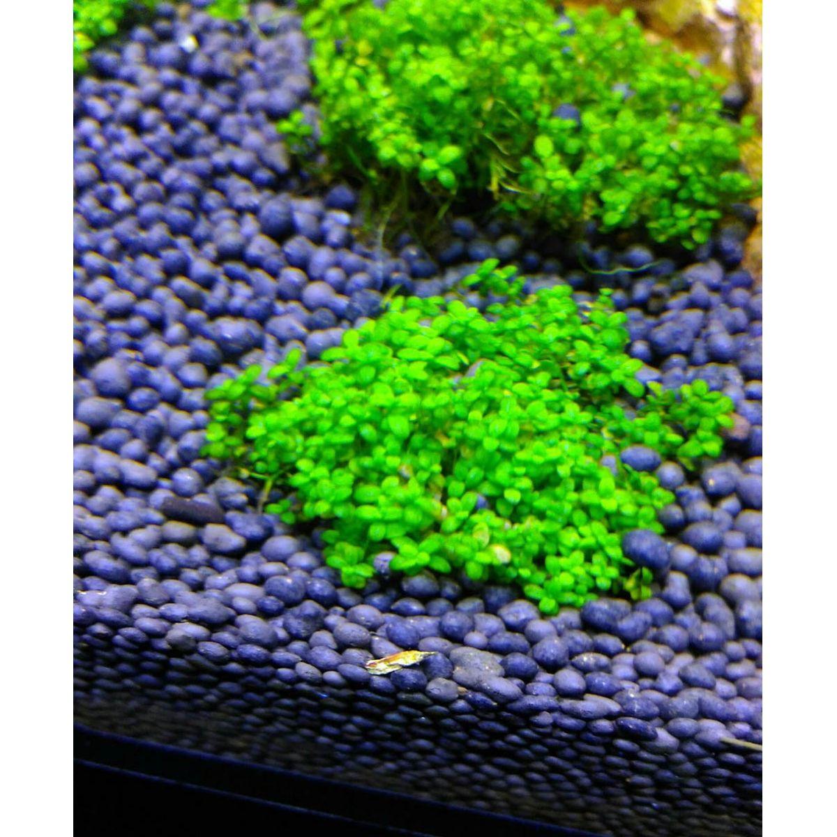 SUBSTRATO FÉRTIL PLANT ACTIVE PRETO OCEAN TECH - 5 Kg
