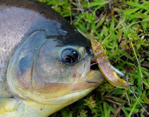 Anzol Monster 3X Offset Lastreado 3/0 ou 4/0  - Comprando & Pescando