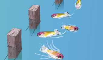 Isca Duel Silver Prop 60  - Comprando & Pescando