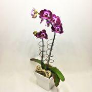 Orquídea Phalaenópsis Exótica