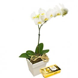 Phalaenópsis e Ferrero Rocher 8 un