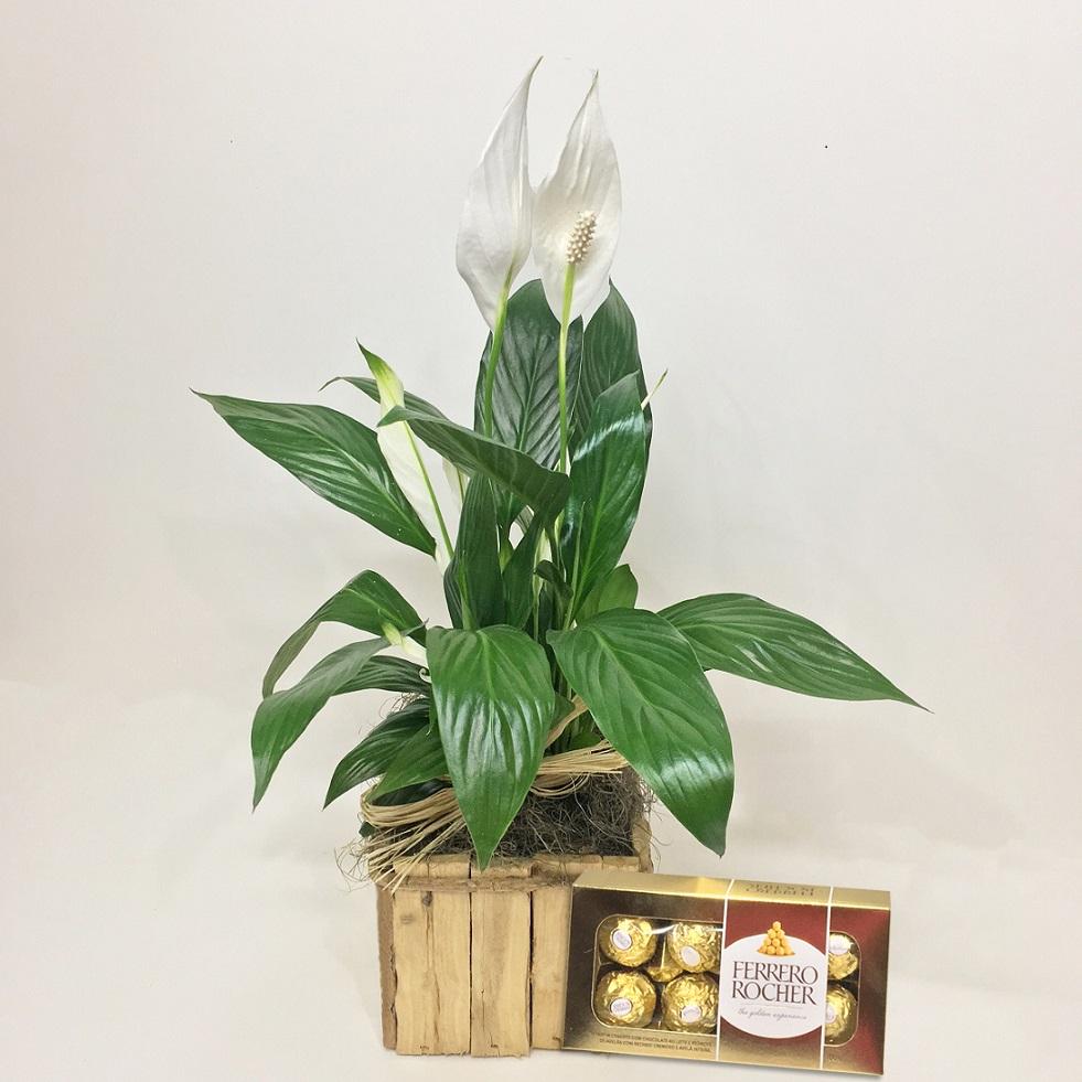 Ferrero Rocher e Lírio da Paz