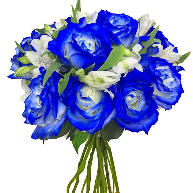 Lindas Rosas Azuis