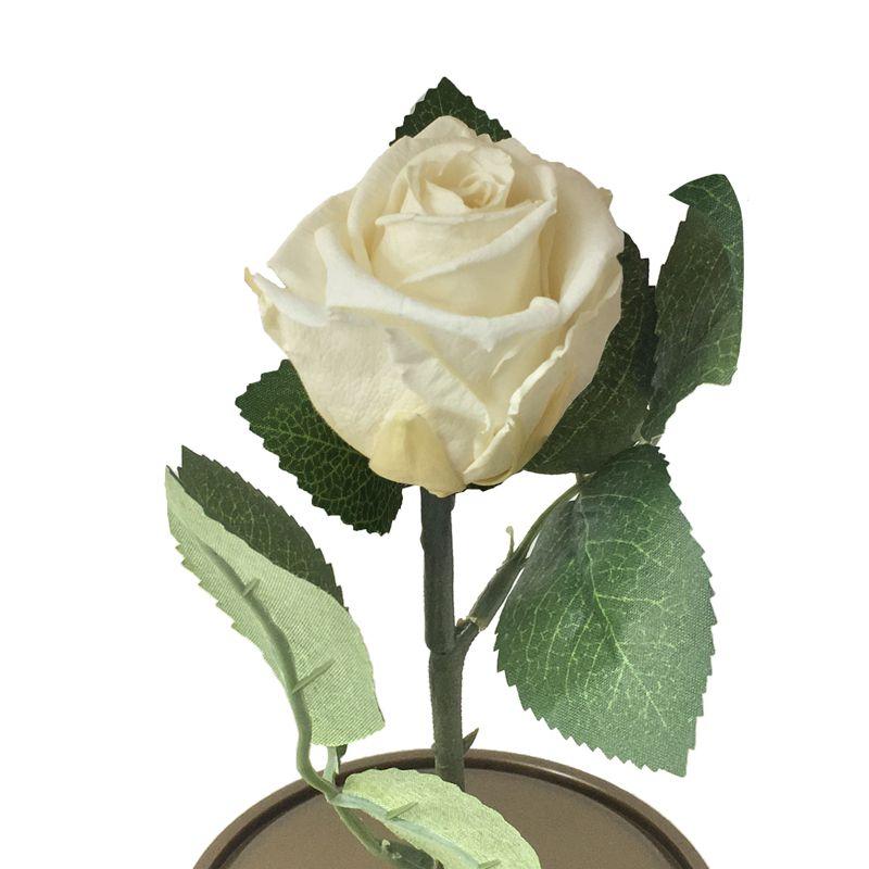 Mini Magic Rose Branca