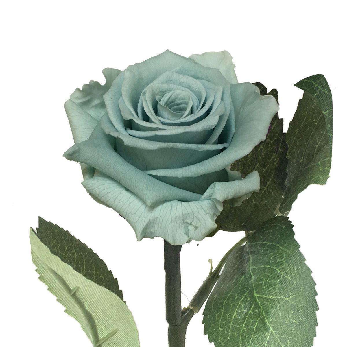 Mini Magic Rose Azul