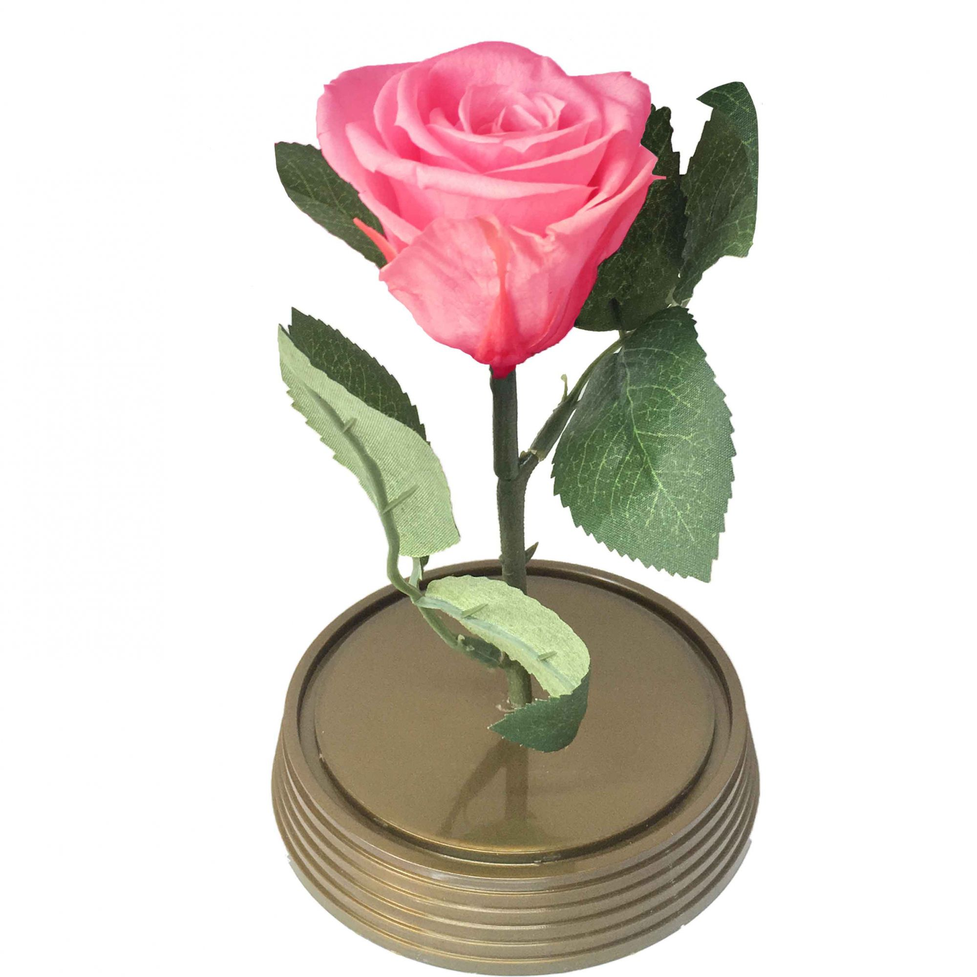 Mini Magic Rose Rosa