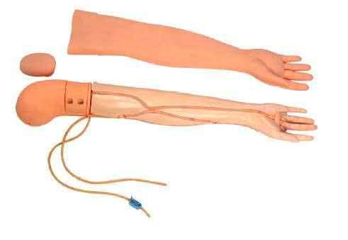 Modelo de Braço para Punção Venosa e Injeções para Nível Avançado – Mod. ES6021 - Edutec