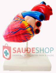 Modelo de Coração em Tamanho Natural em 2 Partes - Mod.EB-3021 - Edutec