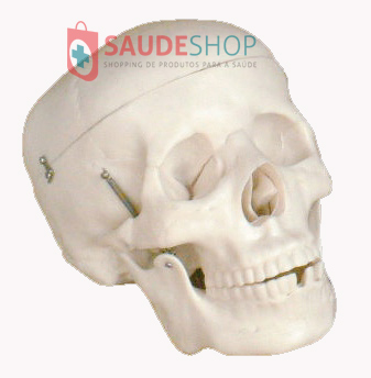 Modelo de Crânio Tamanho Natural Adulto em 3 partes - Mod. EB-3006 - Edutec