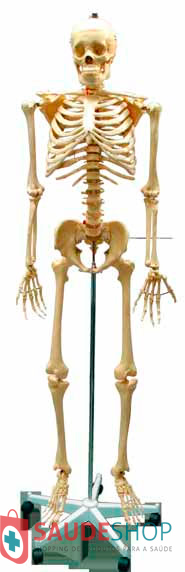 Modelo de Esqueleto Humano 1,70M -  Mod.EB-3003 - Edutec