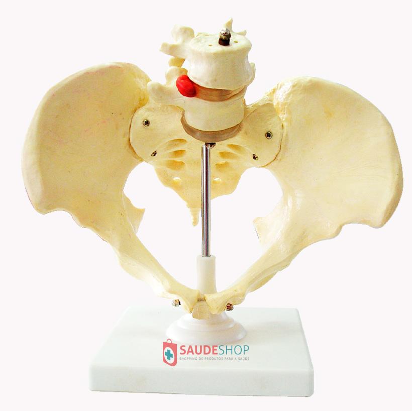 Modelo de Esqueleto Pélvico (Pélvis) Feminino - Mod.EB-3106 - Edutec