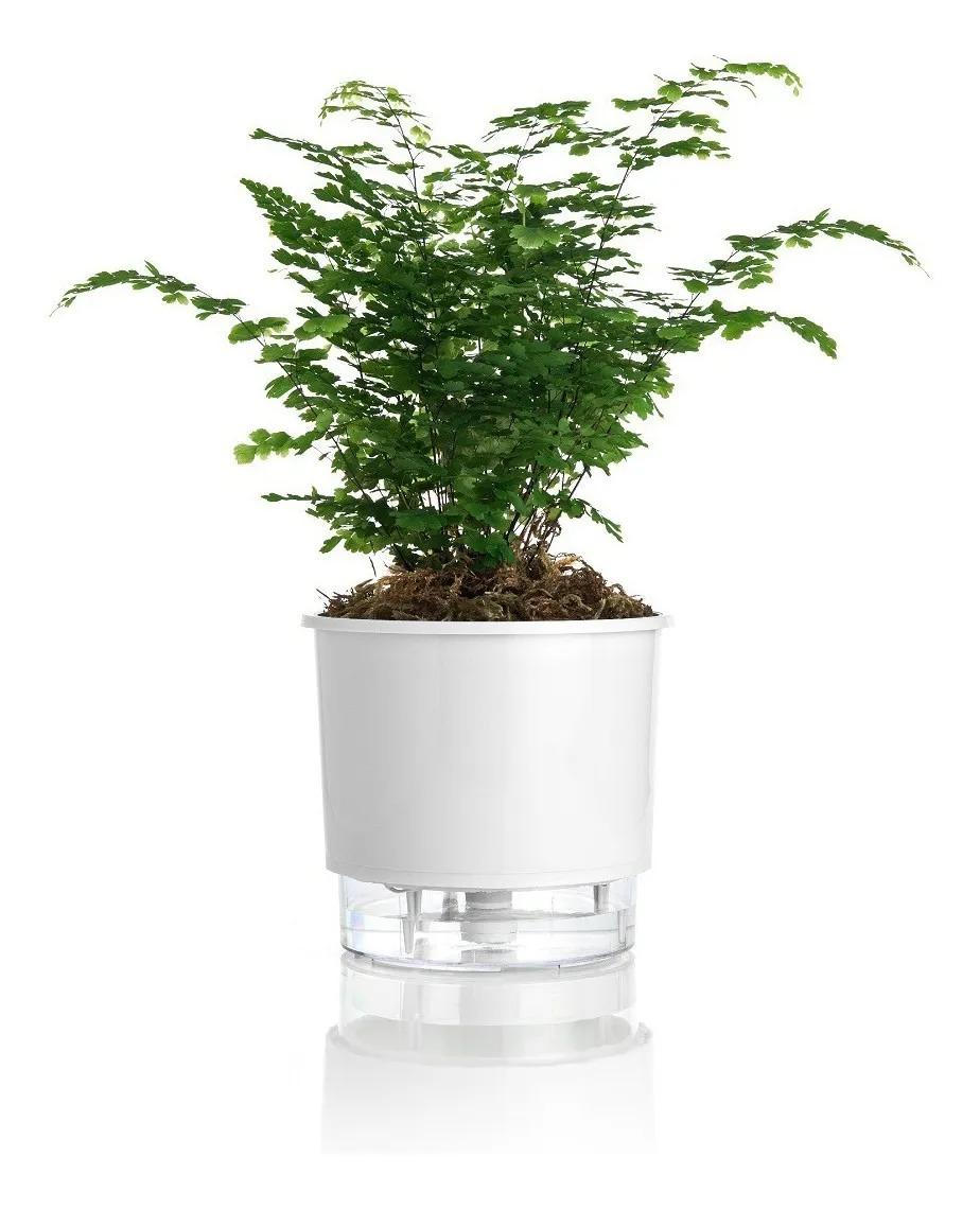 Vaso Raiz Auto Irrigável 16cm N3 Autoirrigável Planta Cores