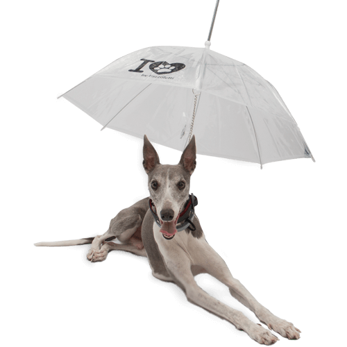 Guarda - Chuva para Pets