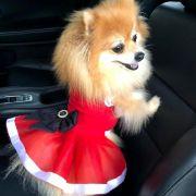 Vestido Pet Tutu Natal