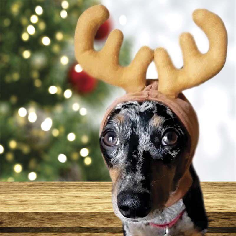 Enfeite para Cabeça do Pet de Natal Alce