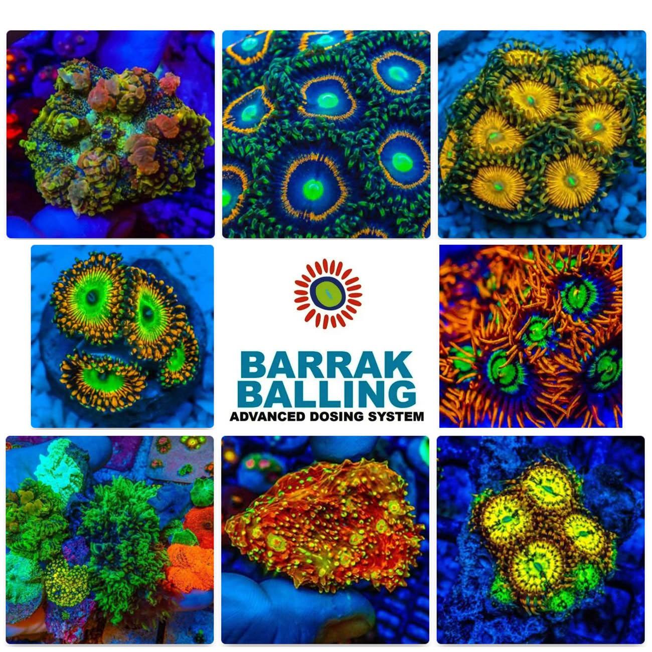 Kit Balling + Alimento para Corais Nano Barrak