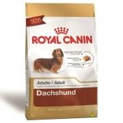 Ração Royal Canin SBN Adult para Cães Adultos da raça Dachshund