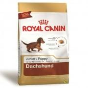 Ração Royal Canin SBN Junior para Cães Filhotes da raça Dachshund