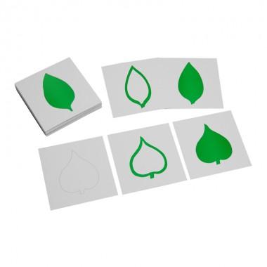 Conjunto de Cartões de 3 Partes de Folhas