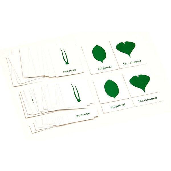 Cartões de Nomenclatura para Estante de Botânica (em Inglês)