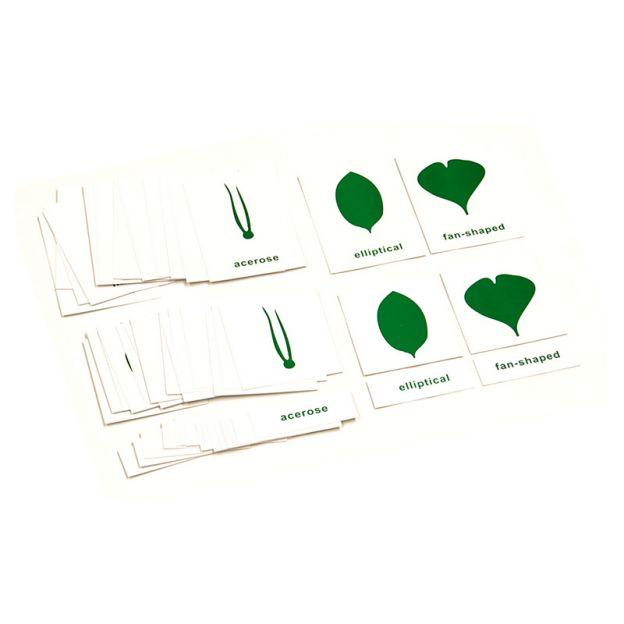 Estante de Botânica - 3 Gavetas com Folhas + Tabela e Cartões de Nomenclatura em Inglês Grátis