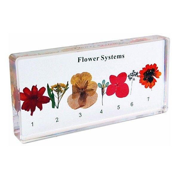 Sistemas das Flores
