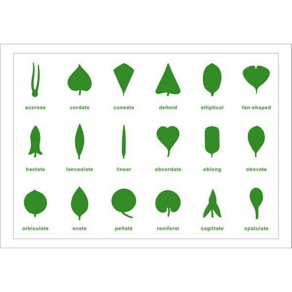 Tabela de Controle para Estante de Botânica (em Inglês)