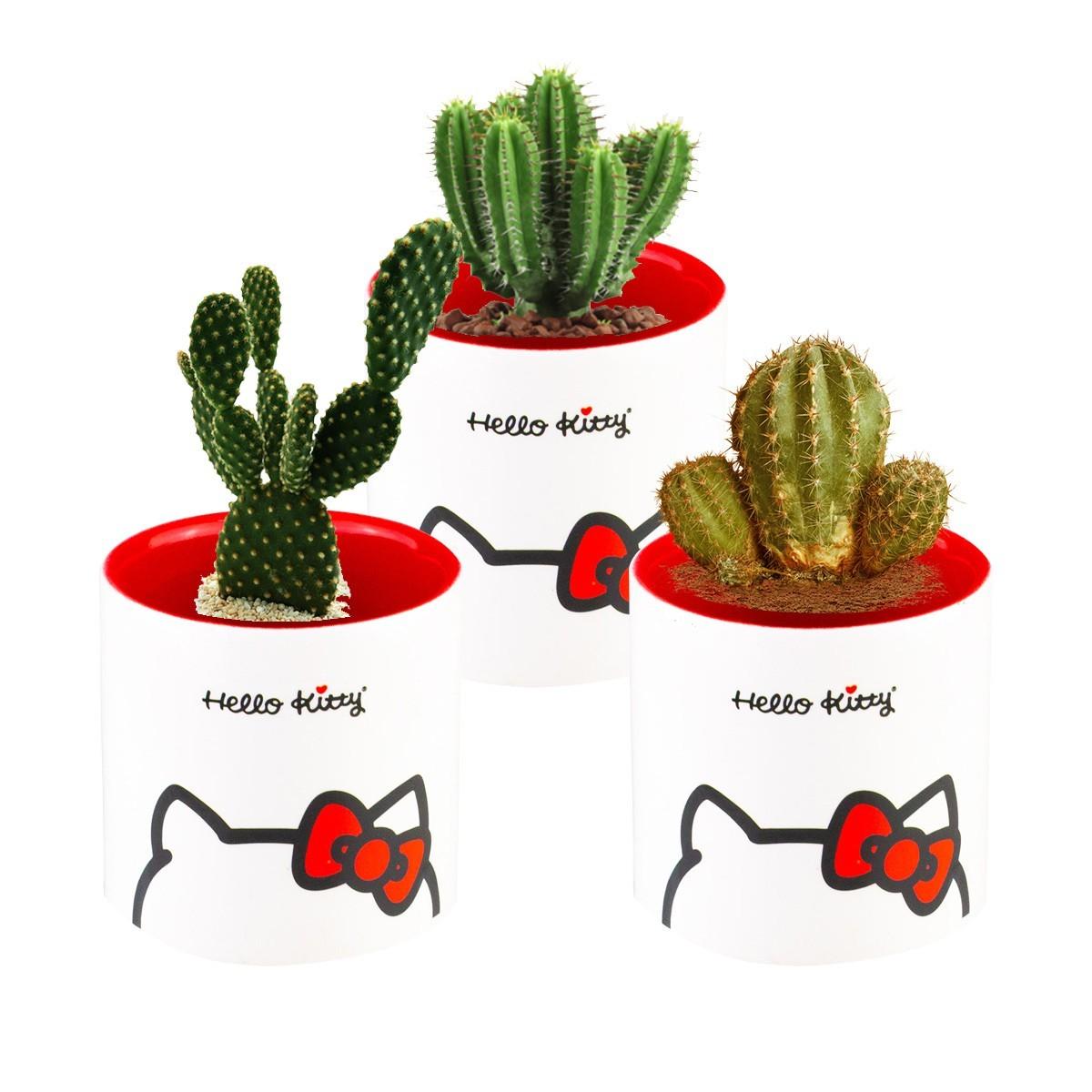 Trio Cachepot Decorativo De Cerâmica Hello Kitty Urban