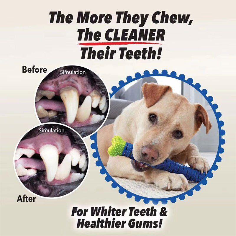 Mordedor Escova de dente ChewBrush Brinquedo Cachorro Gato