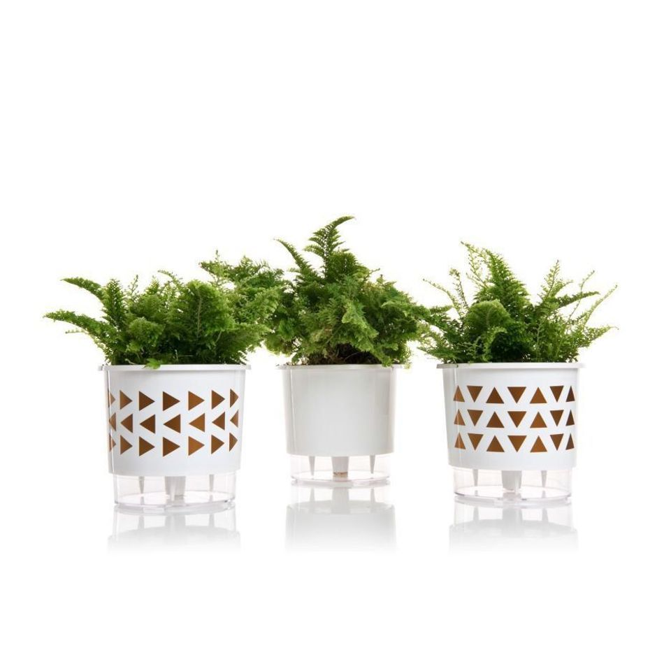 Kit 3 Vasos Autoirrigáveis Coleção Wishes Raiz