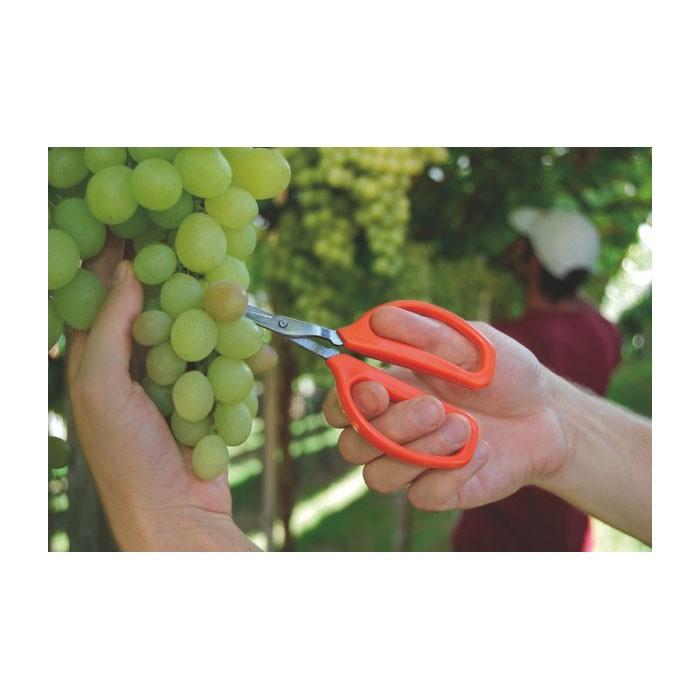 Tesoura para Frutas Ref 78311/451