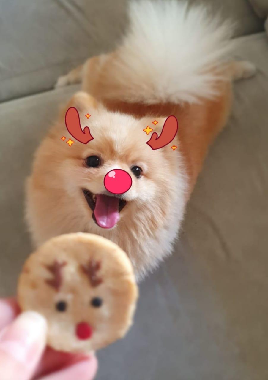 Biscoitos de Natal para Cães