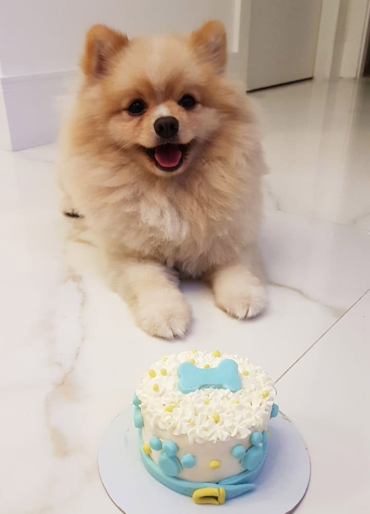 Bolo de Aniversário para Cães com Pasta Americana e Patinhas Envolta