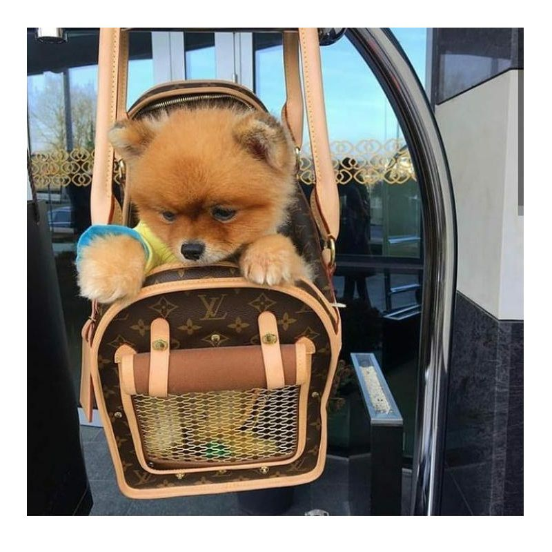 LOUIS VUITTON DOG CARRIE