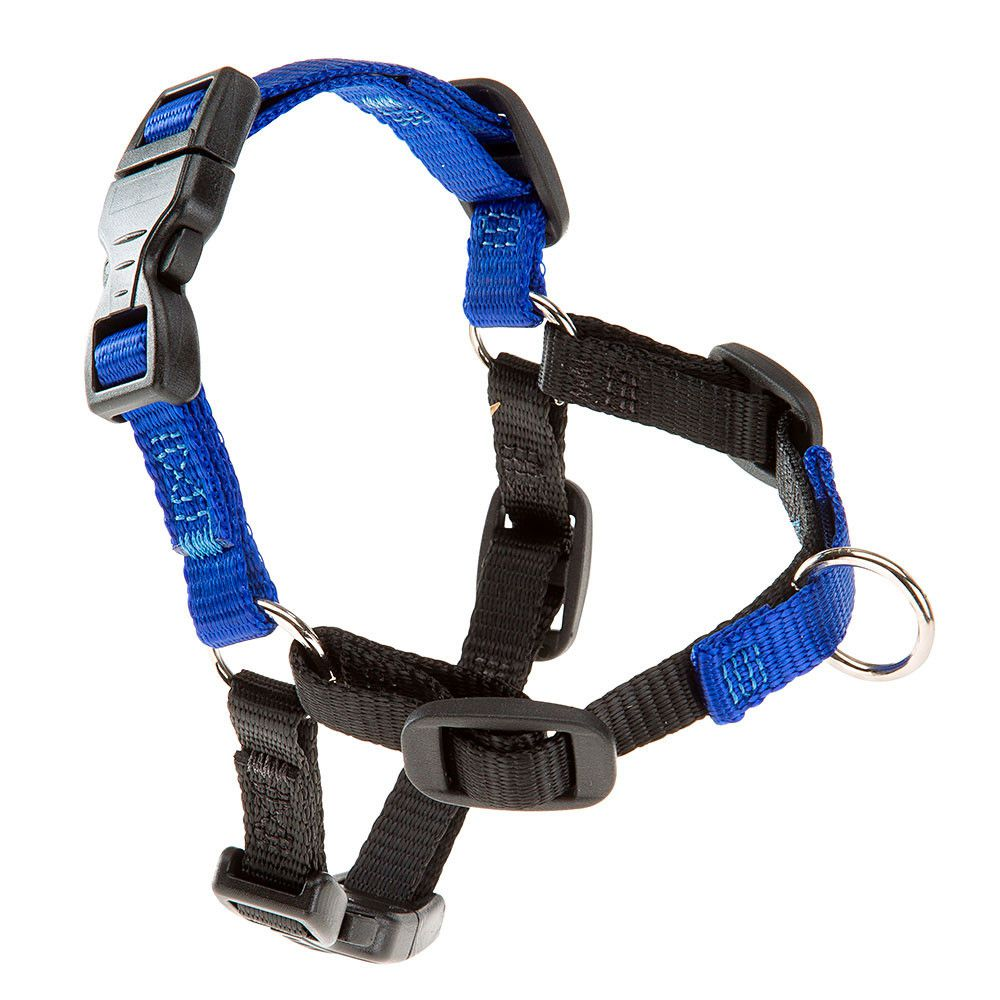 Peitoral de Treinamento Coach Azul Ferplast