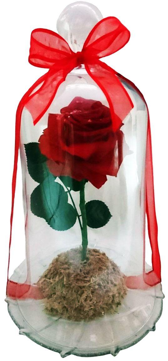 Encanto de Rosa M