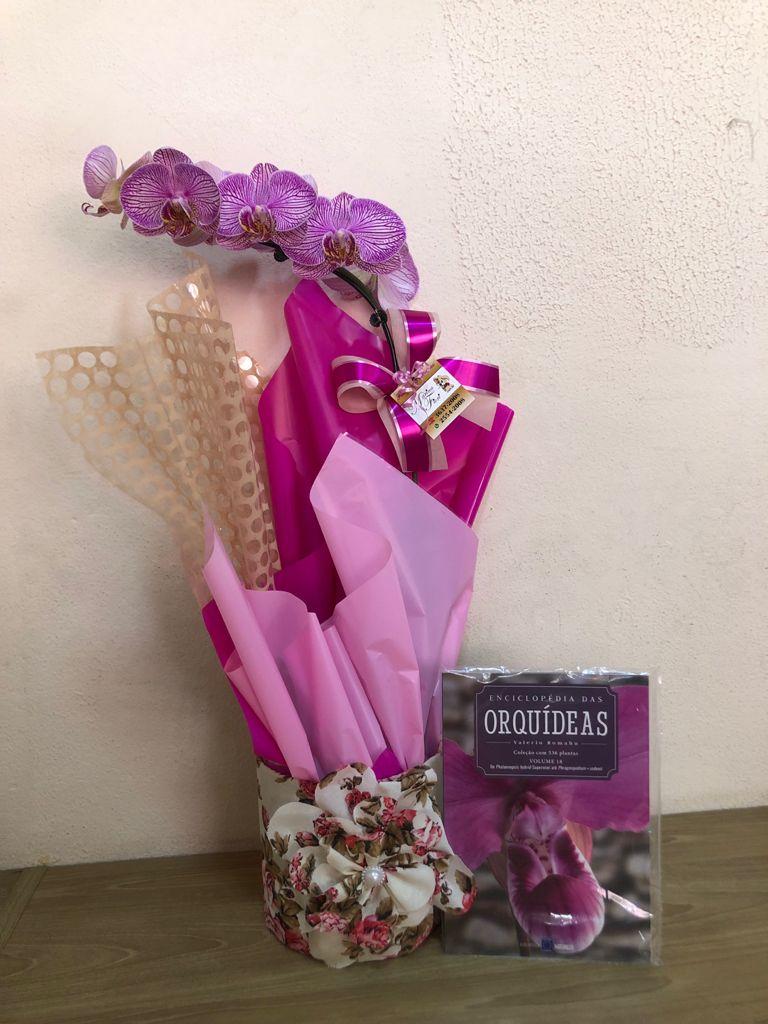 Orquídea Phalaenopsis com Livro