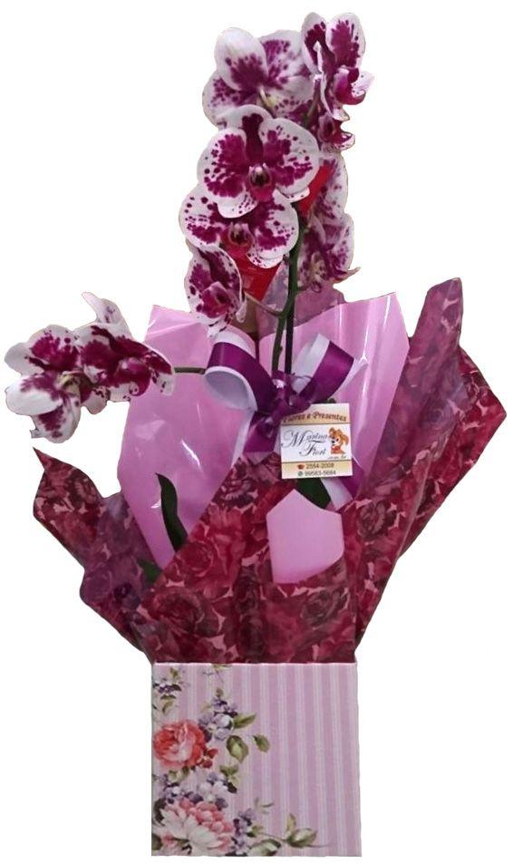 Orquídea Phalaenopsis Rosa com Pintas